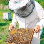 Ajutor financiar pentru apicultori