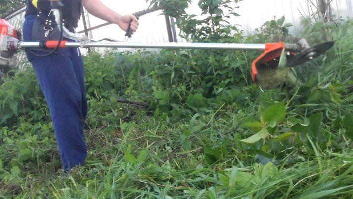 Terenurile private din Timișoara trebuie să fie igienizate și curățate de buruieni