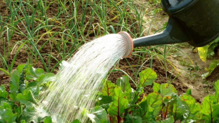 Aquatim: apa potabilă nu trebuie folosită pentru udatul grădinilor!