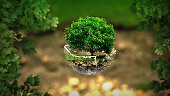 Protecția mediului, în dezbatere la UPT