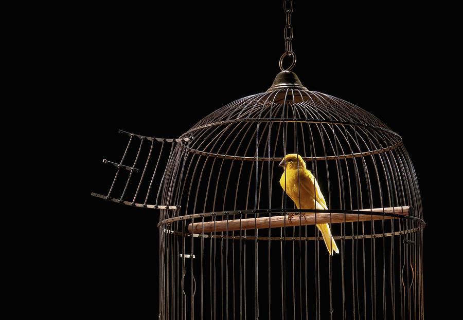 colivia-cu-canari